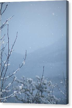 Canvas Print featuring the photograph Flakes by Brian Boyle
