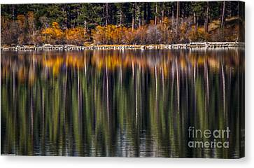 Flames Of Autumn Canvas Print by Mitch Shindelbower