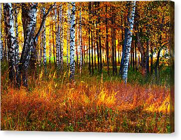 Flaming Grass Canvas Print by Jenny Rainbow