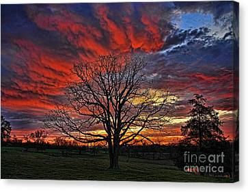 Pastureland Canvas Print - Flaming Oak Sunrise by Reid Callaway