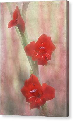 Flaming Red Canvas Print