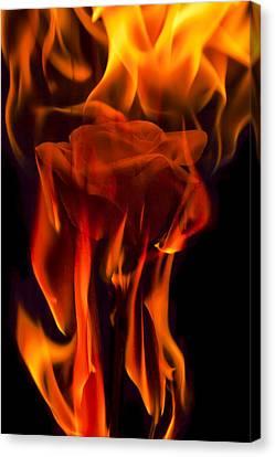 Flaming Rose Canvas Print by Jon Glaser