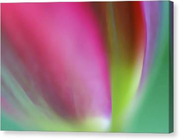 Canvas Print featuring the photograph Flaming Tulip by Annie Snel