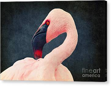 Flamingo Canvas Print by Angela Doelling AD DESIGN Photo and PhotoArt