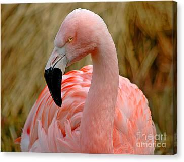 Canvas Print featuring the photograph Flamingo Art by Nick  Boren