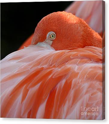 Canvas Print featuring the photograph Flamingo At Rest. by Bob and Jan Shriner
