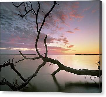 Everglades National Park Canvas Print - Flamingo Bay, Everglades National Park by Tim Fitzharris