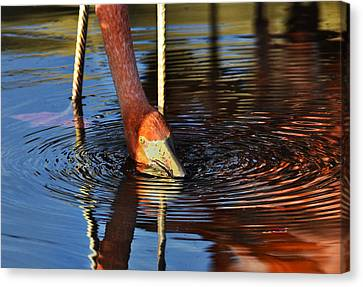 Flamingo Close Up Canvas Print by Dave Dilli