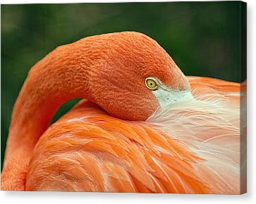 Canvas Print featuring the photograph Flamingo Closeup by RC Pics