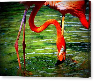 Canvas Print featuring the photograph Flamingo by David Mckinney