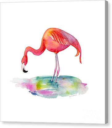 Flamingo Dip Canvas Print by Amy Kirkpatrick