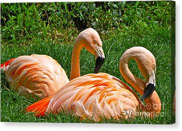 Flamingo Duo Canvas Print by Eve Spring