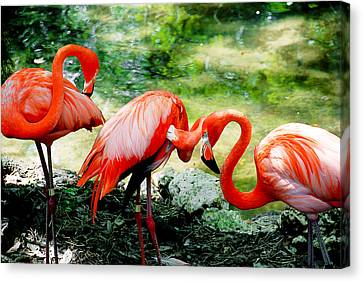 Flamingo Friends Canvas Print by Beverly Stapleton