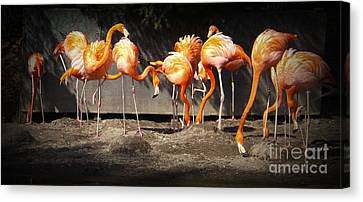Flamingo Hangout Canvas Print