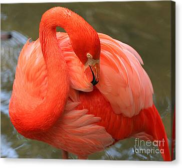 Canvas Print featuring the photograph Flamingo by Larry Nieland