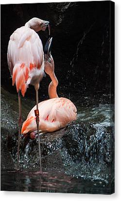 Canvas Print featuring the photograph Flamingo Love by Mike Lee