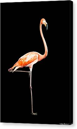 Canvas Print featuring the photograph Flamingo On Black by Avian Resources