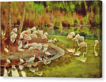 Flamingo Pond Canvas Print by Kathy Jennings