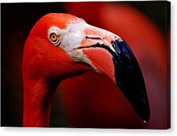 Canvas Print featuring the photograph Flamingo Portrait by Lorenzo Cassina