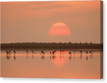 Flamingos At Sunrise Canvas Print
