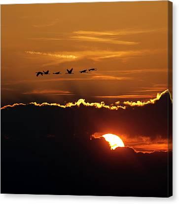 Flamingos At Sunset Canvas Print