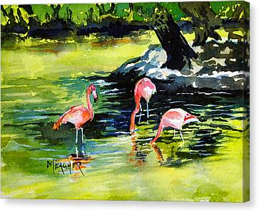 Flamingos At The St Louis Zoo Canvas Print by Spencer Meagher