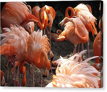 Canvas Print featuring the photograph Flamingos by Beth Vincent