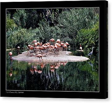 Canvas Print featuring the photograph Flamingos Colony by Pedro L Gili