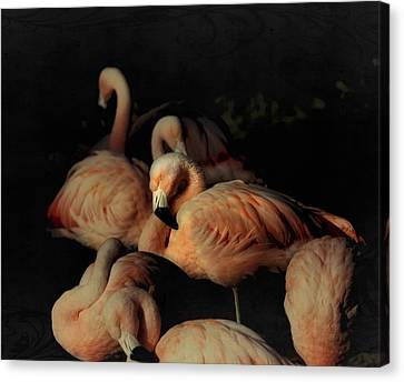 Flamingos In Repose Canvas Print by Kandy Hurley