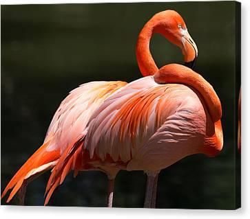 Flamingos Canvas Print by John Kunze