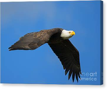 Flaps Down Canvas Print by Mike Dawson