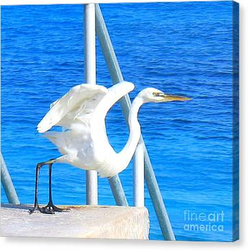 Flaps Up Canvas Print by Patti Whitten