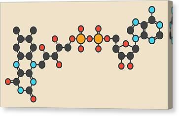 Flavin Adenine Dinucleotide Molecule Canvas Print by Molekuul
