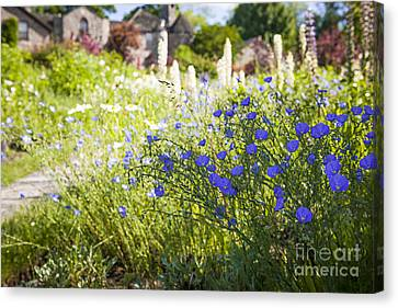Flax Flowers In Summer Garden Canvas Print by Elena Elisseeva