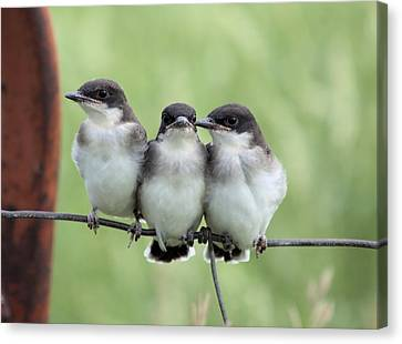 Fledged Siblings Canvas Print by Bonfire Photography