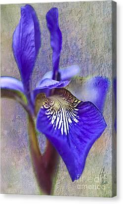 Fleur-de-lys Canvas Print by Heiko Koehrer-Wagner