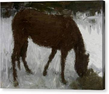 Canvas Print featuring the painting Flicka by Bruce Nutting