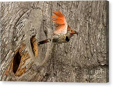 Flicker Flight Canvas Print