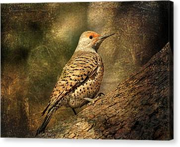 Flicker In A Tree Canvas Print by Donna Kennedy