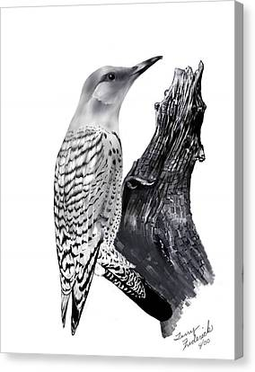 Canvas Print featuring the drawing Flicker by Terry Frederick