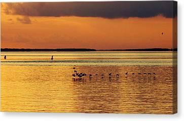 Flight At Sunset Canvas Print