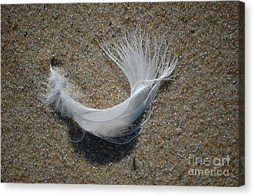Canvas Print featuring the photograph Flight by Christiane Hellner-OBrien