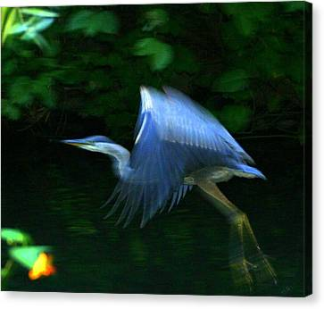 Canvas Print featuring the photograph Flight by Debra Kaye McKrill