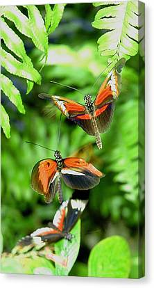 Flight Canvas Print by  George Griffiths
