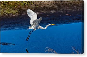 Flight Of The Egret Canvas Print by John M Bailey