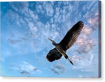 Canvas Print featuring the photograph Flight Of The Heron by Bob Orsillo
