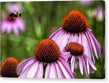 Flight Of The Honey Bee Canvas Print by John Crothers