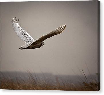 Canvas Print featuring the photograph Flight Of The Snowy Owl by Erin Kohlenberg