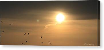 Flight Of The Sunset Canvas Print by Debra Forand