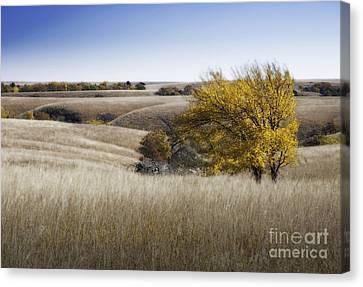 Flint Hills Autumn 013 Canvas Print by Fred Lassmann